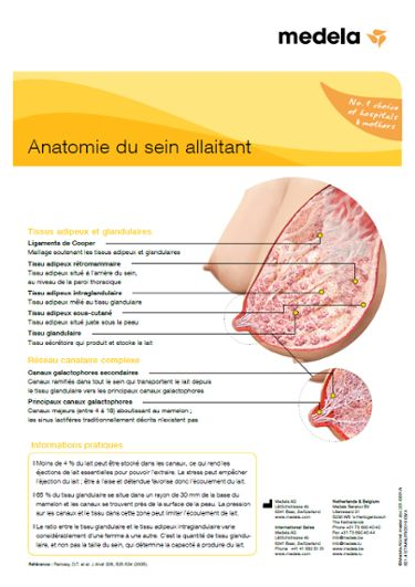 Anatomy of the breast FR infographic